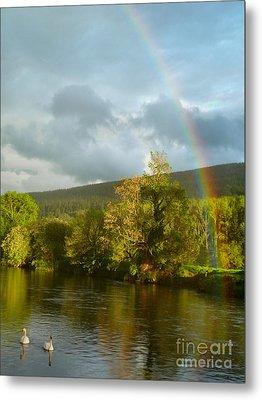 Swans And Double Rainbow 2 Metal Print by Debra Collins