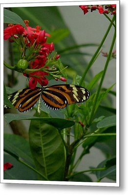 Metal Print featuring the photograph Sweet Nectar by Frank Wickham