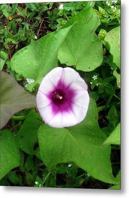 Sweet Purple Flower Metal Print by Juliana  Blessington