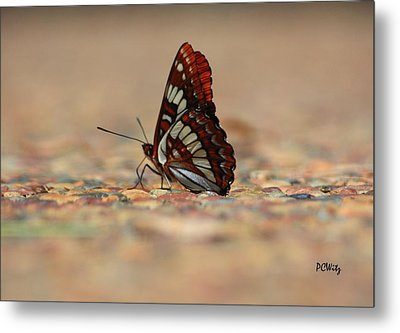 Metal Print featuring the photograph Taking A Breather by Patrick Witz