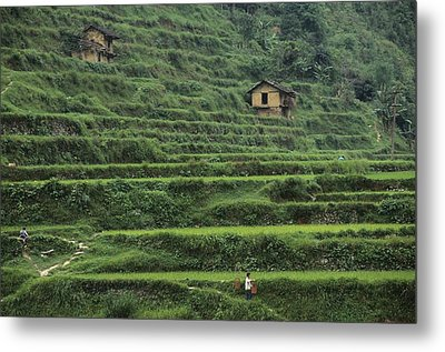 Terraces For Agriculture Metal Print by Raymond Gehman