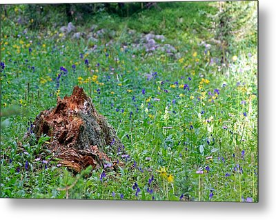 The Contrast Of Life And Decay Metal Print