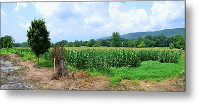Metal Print featuring the photograph The Corn Field by Paul Mashburn