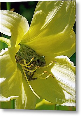 The Day Lily Met Her Prince Metal Print by Sue Stefanowicz