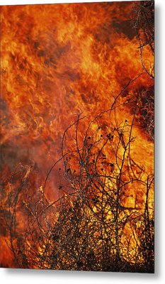 The Flames Of A Controlled Fire Metal Print by Joel Sartore