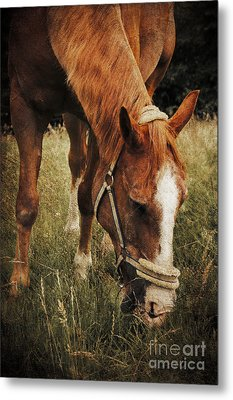 The Horse Metal Print by Angela Doelling AD DESIGN Photo and PhotoArt