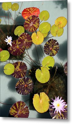 The Lily Pond Metal Print by James Mancini Heath