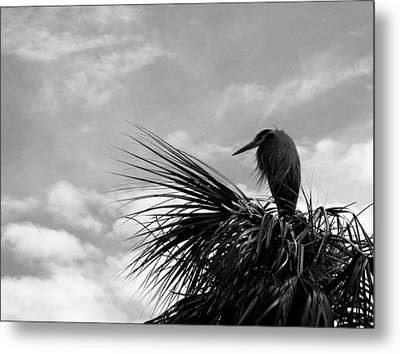 The Lonely Great Blue Heron Metal Print by Judy Wanamaker