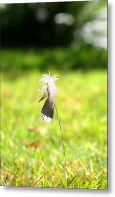 The Lost Feather Metal Print