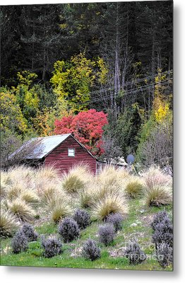 The Red Shed Metal Print by Karen Lewis