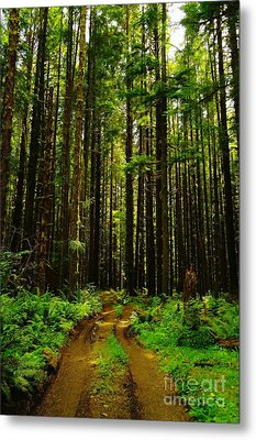 The Road Into The Green  Metal Print by Jeff Swan