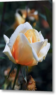 Metal Print featuring the photograph The Rose by Fotosas Photography