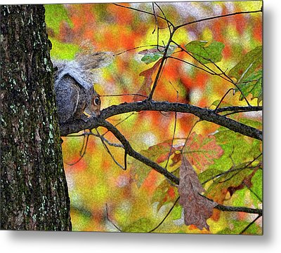 Metal Print featuring the photograph The Squirrel Umbrella by Paul Mashburn