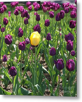 Metal Print featuring the photograph The Stand Out by Julie Clements