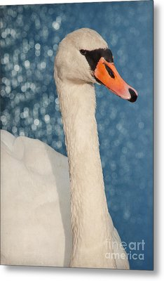 The Swan Metal Print by Angela Doelling AD DESIGN Photo and PhotoArt