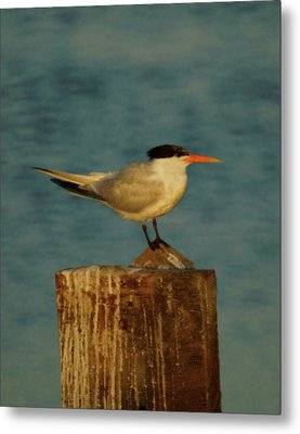 The Tern Metal Print by Ernie Echols