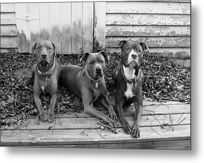 The Three Stoogies Metal Print by Abby Smith