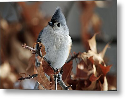 Metal Print featuring the photograph The Titmouse by Mike Martin