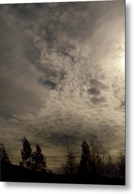 The Tree Cloud Metal Print by Barbara Stirrup