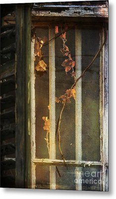 The Vine Inside Metal Print by Sari Sauls