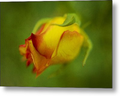 The Yellow Rose Metal Print