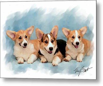 Three Musketeers Corgis Metal Print by Maxine Bochnia
