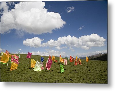 Tibetan Prayer Flags In A Field Metal Print by David Evans