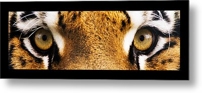 Tiger Eyes Metal Print by Sumit Mehndiratta