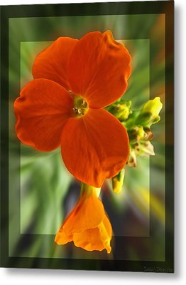 Metal Print featuring the photograph Tiny Orange Flower by Debbie Portwood