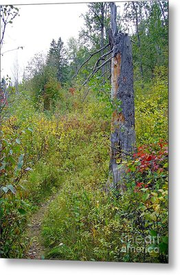 Metal Print featuring the photograph Trail Sign by Jim Sauchyn