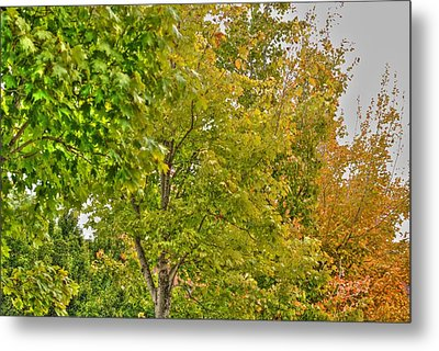 Metal Print featuring the photograph Transition Of Autumn Color by Michael Frank Jr