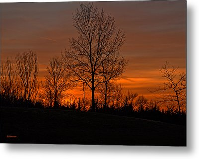 Tree At Sunset Metal Print by Edward Peterson