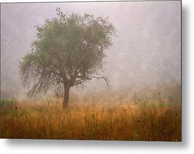 Tree In Fog Metal Print by Debra and Dave Vanderlaan