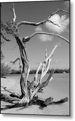 Tree In Tobago Metal Print by Julie VanDore