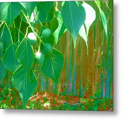 Tree Leaves Metal Print by Juliana  Blessington