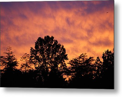 Tree Lined Skies Metal Print