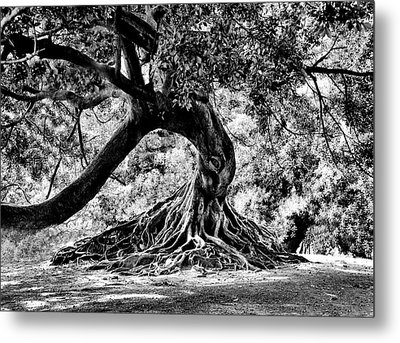 Tree Of Life - Bw Metal Print by Kenneth Mucke