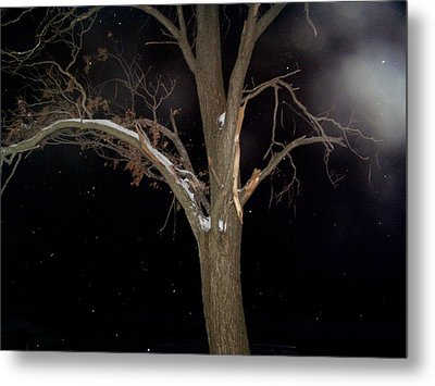 Tree On A Dark Snowy Night Metal Print by Victoria Sheldon