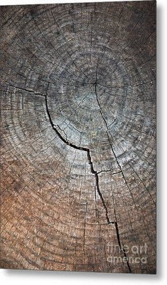 Tree Trunk Metal Print by Carlos Caetano