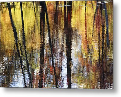 Trees And Fall Foliage Reflected Metal Print by Medford Taylor