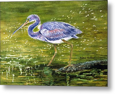 Tri Colored Heron Metal Print