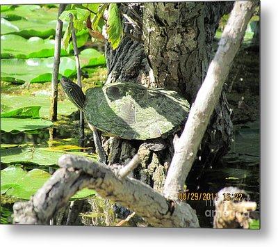 Turtle Sun Metal Print by Thomas Sterett