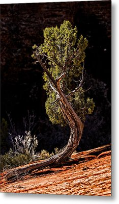 Twisted Reach Metal Print by Christopher Holmes