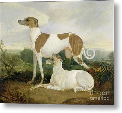 Two Greyhounds In A Landscape Metal Print by Charles Hancock