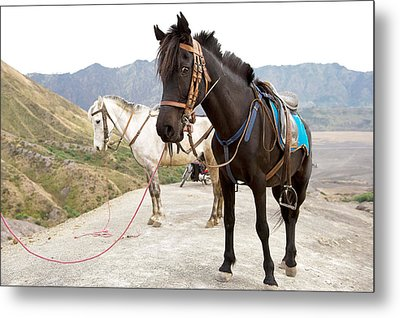 Two Horses Metal Print by Yew Kwang