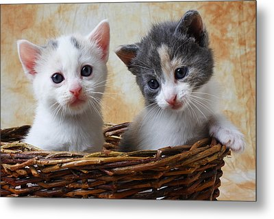 Two Kittens In Basket Metal Print by Garry Gay
