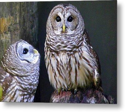 Two Little Owls Metal Print by Judy Wanamaker