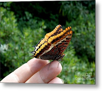Metal Print featuring the photograph Two Tailed Pasha by Lainie Wrightson