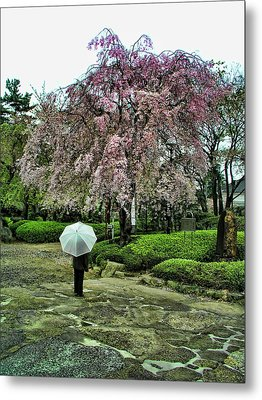 Umbrella With Cherry Blossoms Metal Print