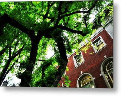 Under Cover Metal Print by Cathie Tyler